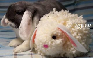 Кролик как просто сшить из помпонов. Пасхальный кролик из помпонов своими руками