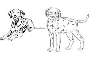 Рисуем собаку поэтапно карандашом разные виды. Рисование далматинца своими руками. Самый простой вариант