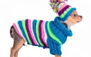 Вязание для чихуахуа своими руками. Вязание для собак