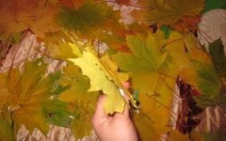 Топиарий из осенних листьев. Создаем топиарий осенний своими руками