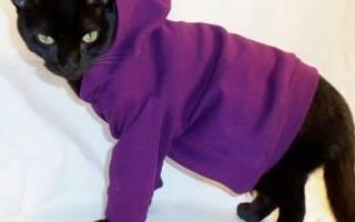 Выкройка одежды для кошек Донских Сфинксов: Универсальная выкройка. Как сшить одежду для кота своими руками