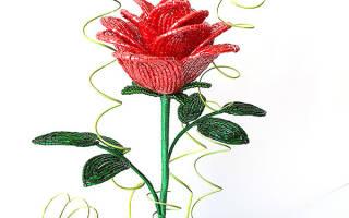 Розы из бисера в вазе. Как сделать розу из бисера для начинающих в рукоделии. Роза из бисера: схема